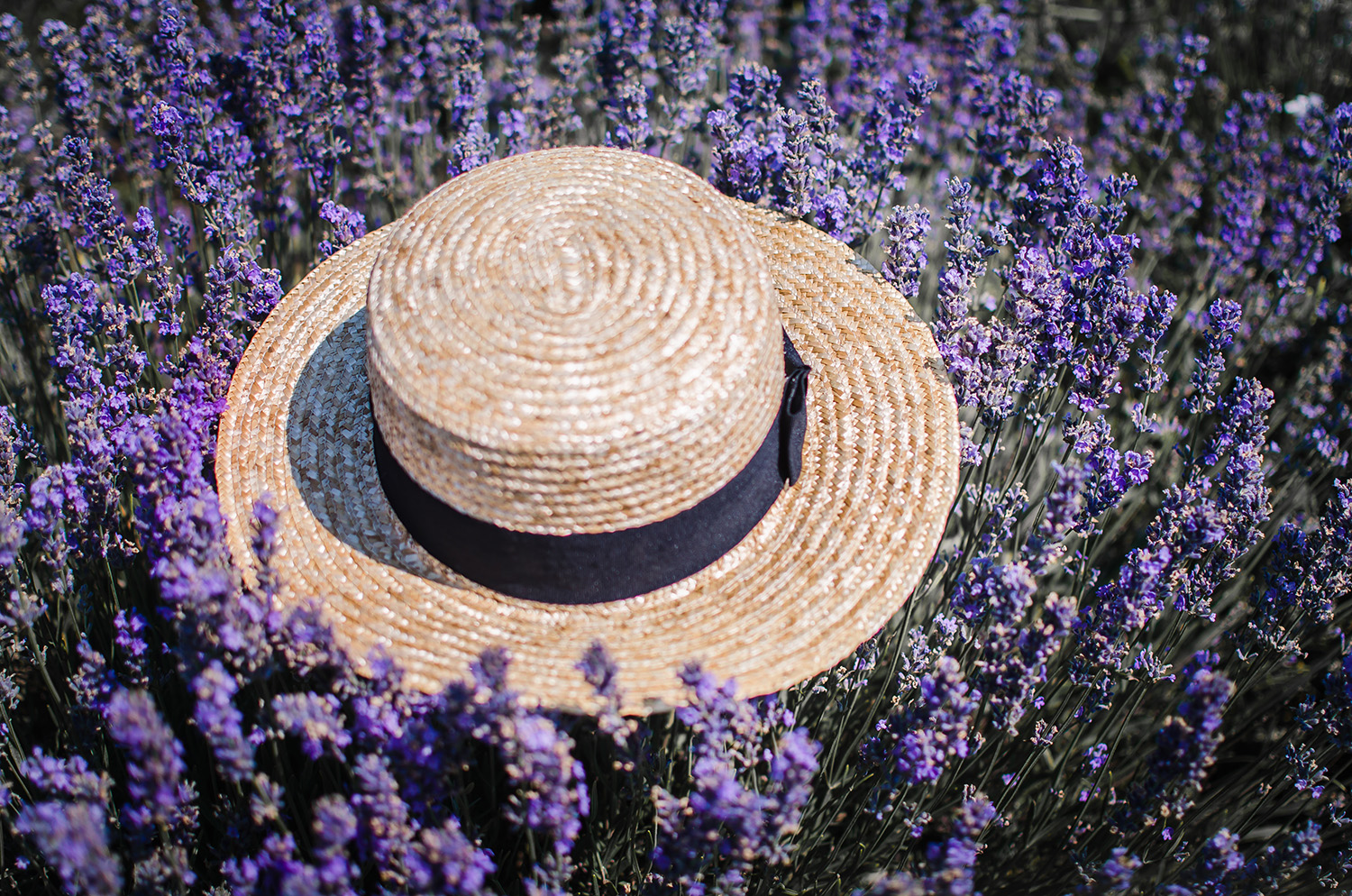 straw hat lavender field anotherside of me blog